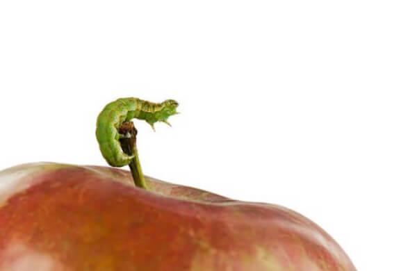 ябълка, тения, паразит